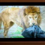 ライオンが噛んだリアル・ダメージジーンズ再び! ZOO JEANSがロフトネットストア限定で販売開始